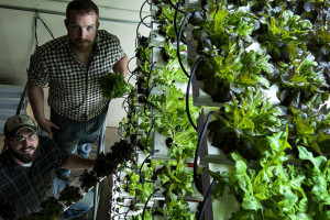 veg e systems vertical hydroponics growing